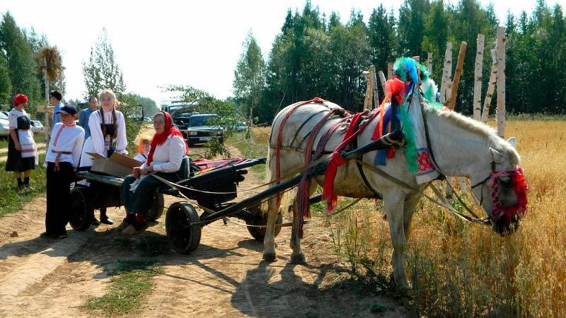 Лошадь с повозкой в поле